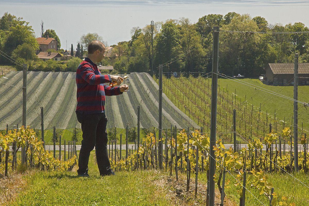 Meilleur Vigneron Suisse.JPG